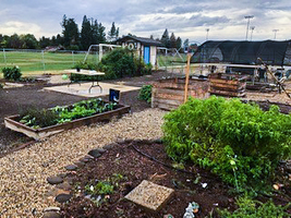 A Garden Grows at Pleasant Valley High School
