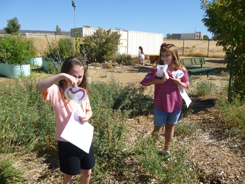 students exploring for microbes in a garden