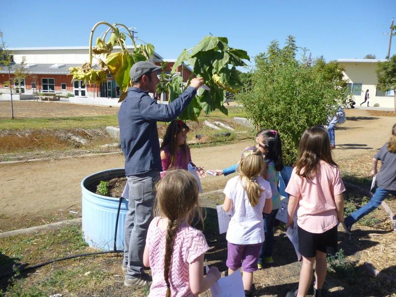 teacher showing sunflower head to students gathered around